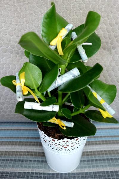 rastlinka-s-peniazmi