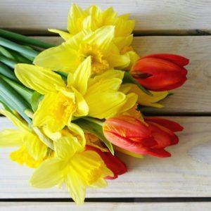 tulipany ako darcek